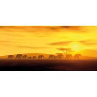 Принт прямоугольный, серия Африка, 013