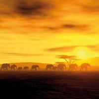 Принт квадратный, серия Африка, 10113