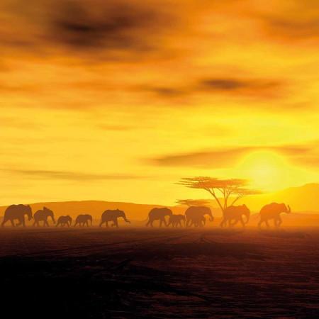 Принт квадратный, серия Африка, 013• Керамические обогреватели AFRICA (Африка)