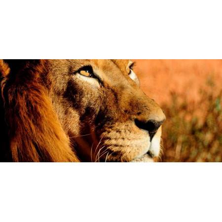 Принт прямоугольный, серия Африка, 015• Керамические обогреватели AFRICA (Африка)