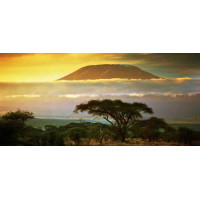 Принт прямоугольный, серия Африка, 023