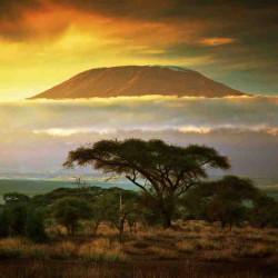 Принт квадратный, серия Африка, 023