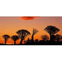 Принт прямоугольный, серия Африка, 026