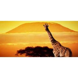 Принт прямоугольный, серия Африка, 027