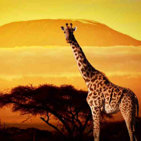 Принт квадратный, серия Африка, 027