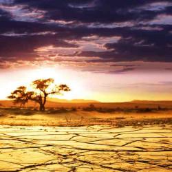 Принт квадратный, серия Африка, 033