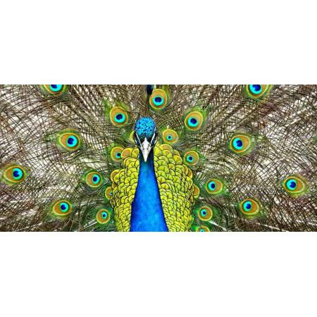 Принт прямоугольный, серия Животные, 041