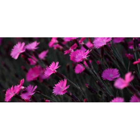 Принт прямоугольный, серия Цветы, 002