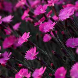 Принт квадратный, серия Цветы, 002