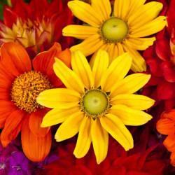 Принт квадратный, серия Цветы, 003