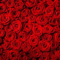 Принт квадратный, серия Цветы, 004