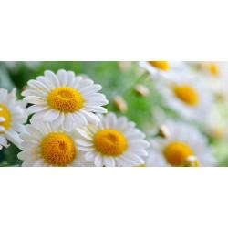 Принт прямоугольный, серия Цветы, 005