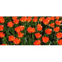 Принт прямоугольный, серия Цветы, 012
