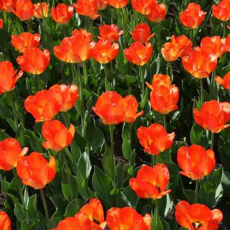 Принт квадратный, серия Цветы, 012