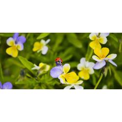 Принт прямоугольный, серия Цветы, 014