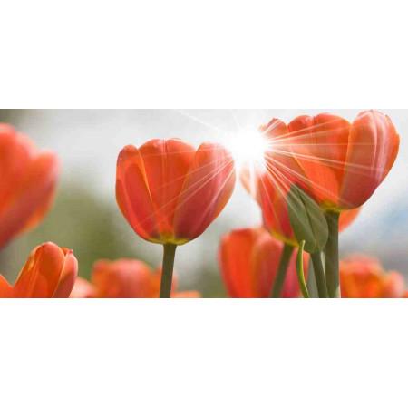 Принт прямоугольный, серия Цветы, 016