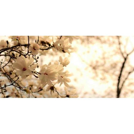 Принт прямоугольный, серия Цветы, 017