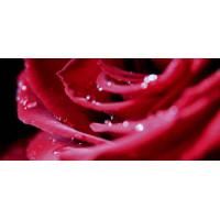 Принт прямоугольный, серия Цветы, 019