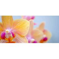 Принт прямоугольный, серия Цветы, 020