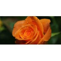 Принт прямоугольный, серия Цветы, 023