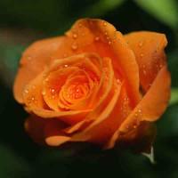 Принт квадратный, серия Цветы, 023