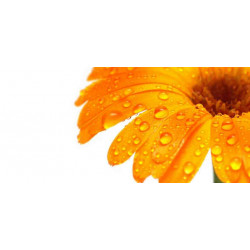 Принт прямоугольный, серия Цветы, 027