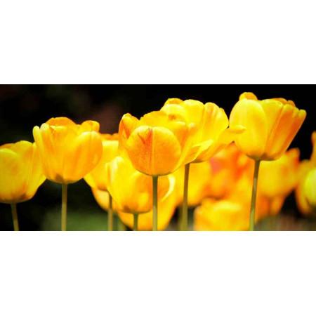 Принт прямоугольный, серия Цветы, 028