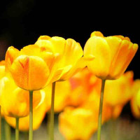 Принт квадратный, серия Цветы, 028