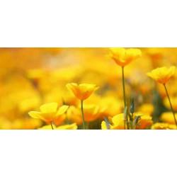 Принт прямоугольный, серия Цветы, 029