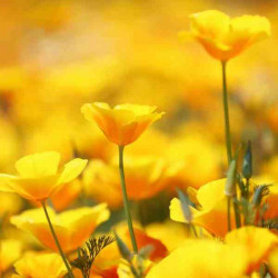 Принт квадратный, серия Цветы, 029
