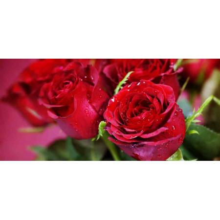 Принт прямоугольный, серия Цветы, 034