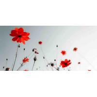 Принт прямоугольный, серия Цветы, 035