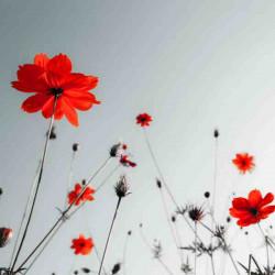 Принт квадратный, серия Цветы, 035