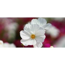 Принт прямоугольный, серия Цветы, 036