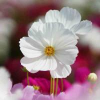 Принт квадратный, серия Цветы, 036