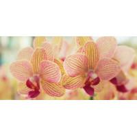 Принт прямокутний, серія Квіти, 037
