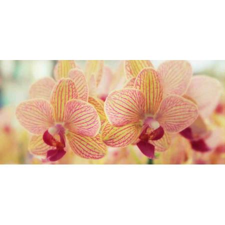 Принт прямоугольный, серия Цветы, 037