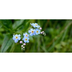 Принт прямоугольный, серия Цветы, 038