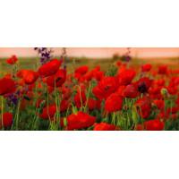 Принт прямоугольный, серия Цветы, 039