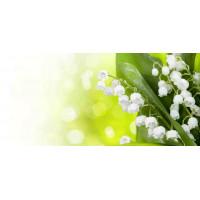 Принт прямоугольный, серия Цветы, 041
