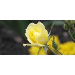 Принт прямоугольный, серия Цветы, 044