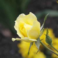 Принт квадратный, серия Цветы, 044