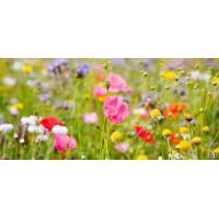 Принт прямоугольный, серия Цветы, 046