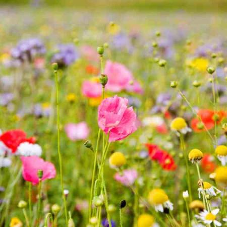 Принт квадратный, серия Цветы, 046