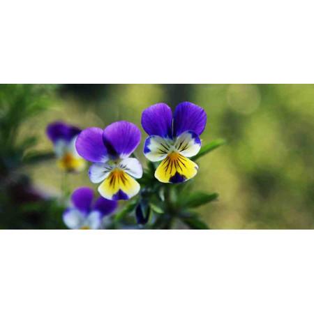 Принт прямоугольный, серия Цветы, 048