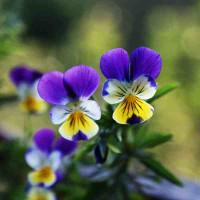 Принт квадратный, серия Цветы, 048