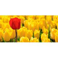 Принт прямоугольный, серия Цветы, 050