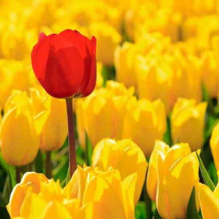 Принт квадратный, серия Цветы, 050