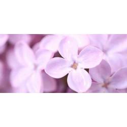 Принт прямоугольный, серия Цветы, 052