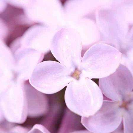 Принт квадратный, серия Цветы, 052